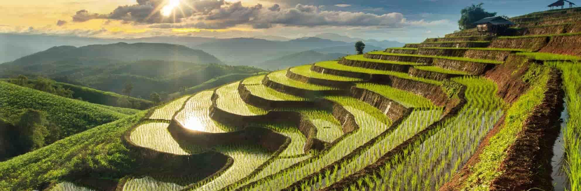 expatriation-chiang-mai
