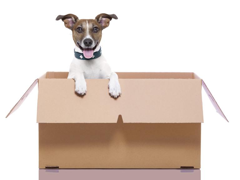 importer chien chat thailande